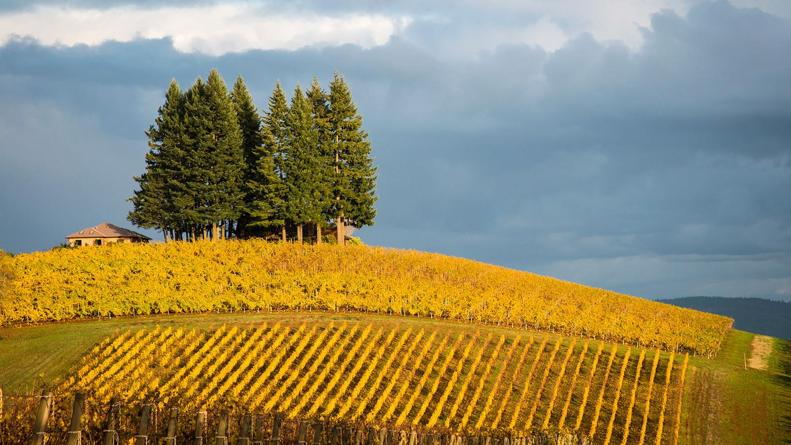Harvest 2015: Oregon's Wet Years Are Not Created Equal