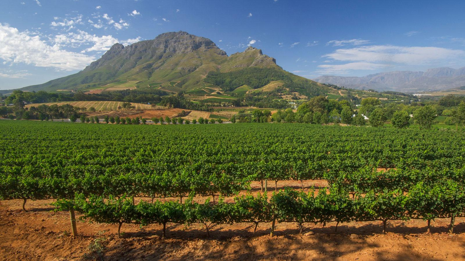 The 2015 Cape Winemakers Guild Auction Wines