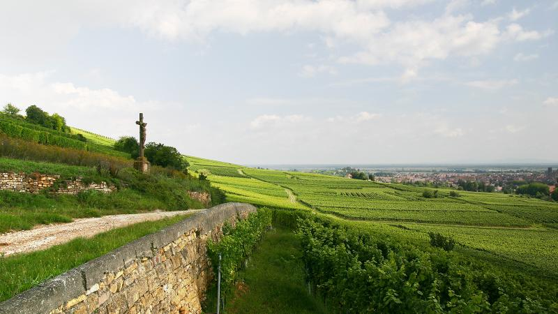 14 Bright Whites and Sparklers From Alsace
