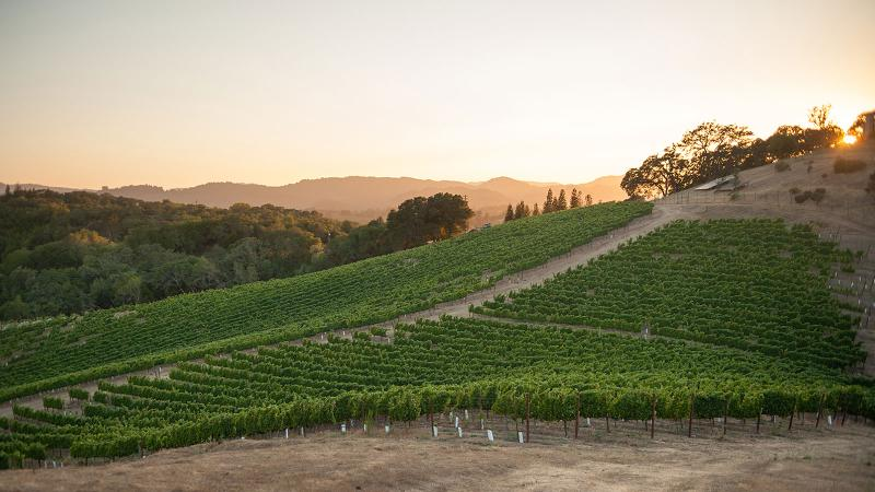 A New Life for Pete Seghesio's Historic Zinfandel Vineyard