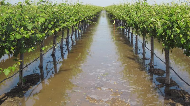 Can California Winegrowers Refill Underground Aquifers?