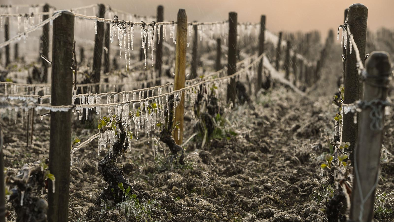 2017 Harvest Report: French Wineries Picking Smallest Crop Since 1945