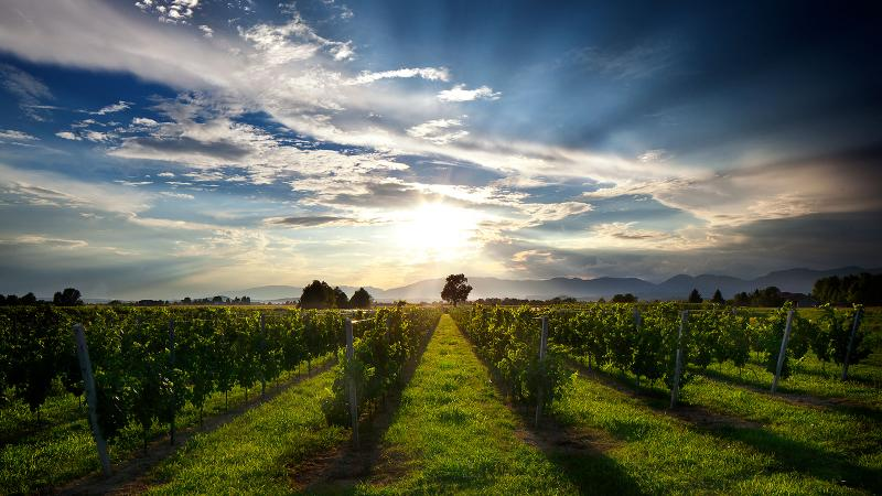 Facing a Meager Harvest, Prosecco Winemakers Win Approval to Use Non-DOC Grapes