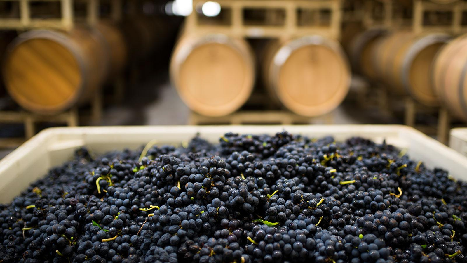 Texas Wineries Unscathed by Hurricane Harvey