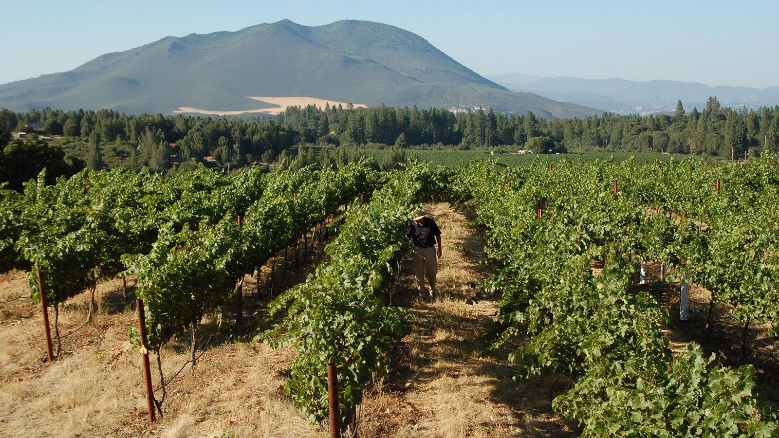 12 California Wines to Be Thankful For