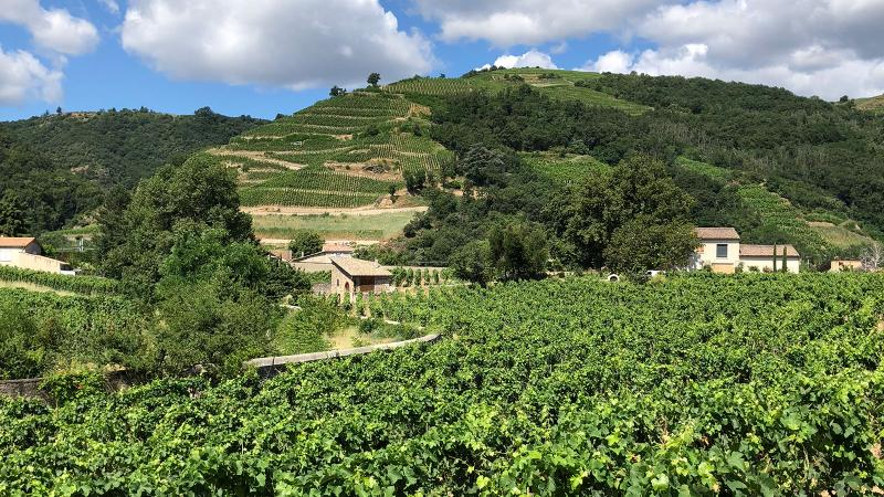 2018 Rhône Harvest: Hot Summer, Happy Vintners