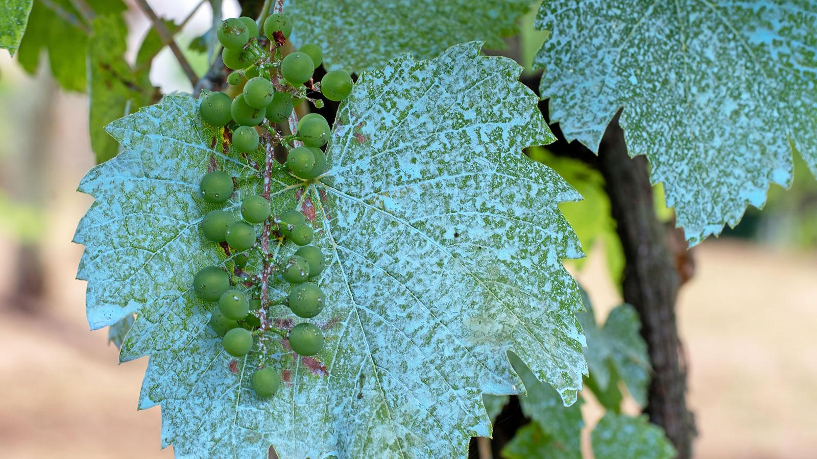 Is Copper Safe for Wine?