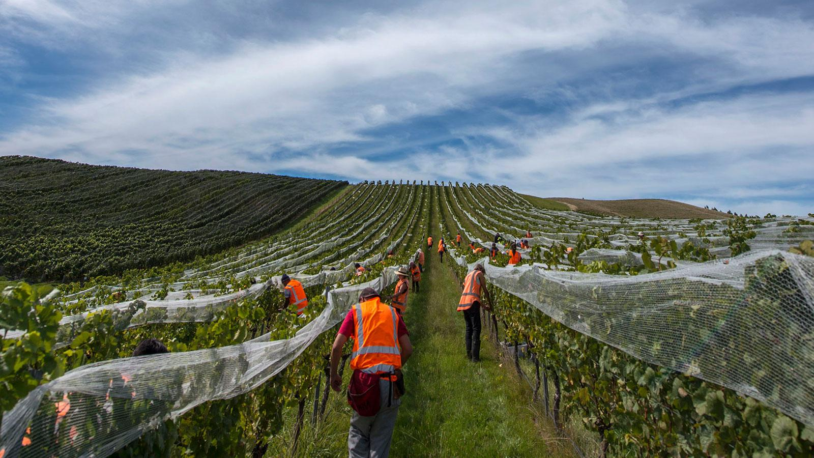 New Zealand Winemakers Call 2018 a Challenging Year that Delivered Promising Wines