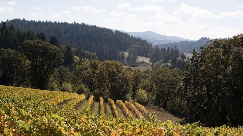 Oregon Strikes Gold with 2016 Pinot Noirs
