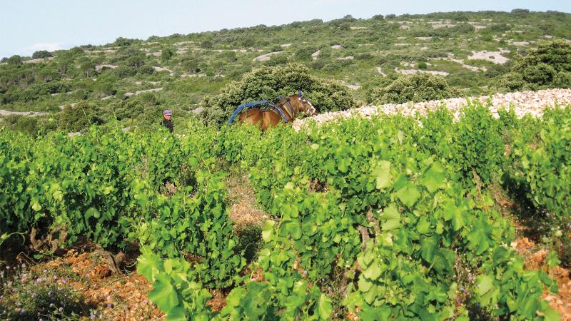 11 Summer-Friendly Languedoc-Roussillon Values