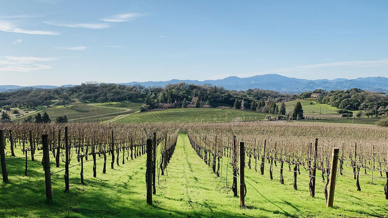 Coombsville's Old-School Cabernet