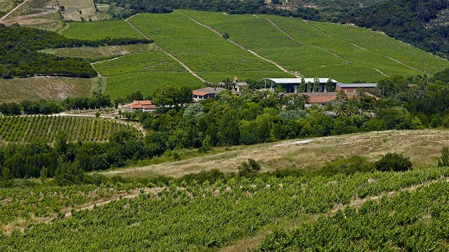 Portugal's Largest Wine Company Bets Big on White Wine Grape Arinto