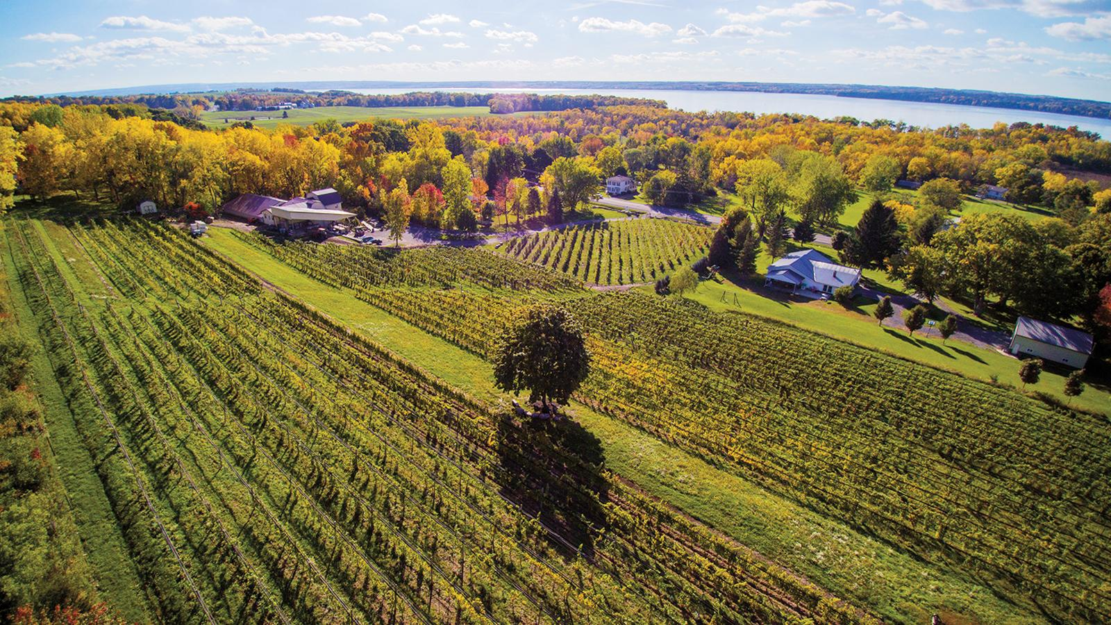 Wine Tip: Get to Know New York's Finger Lakes