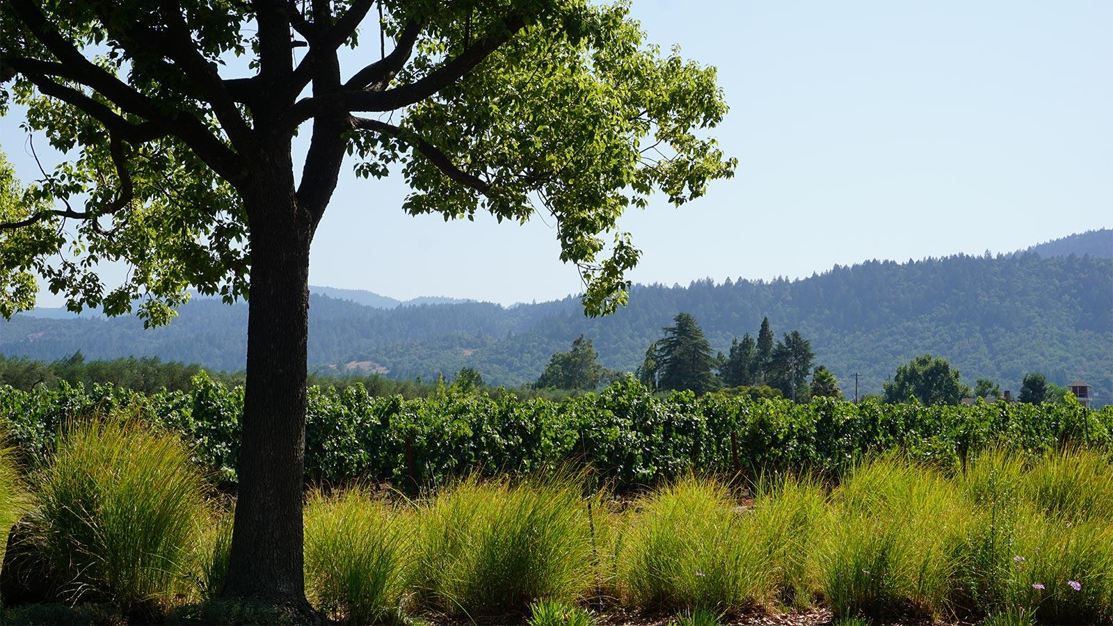 8 Must-Try Napa Wines at 90+ Points