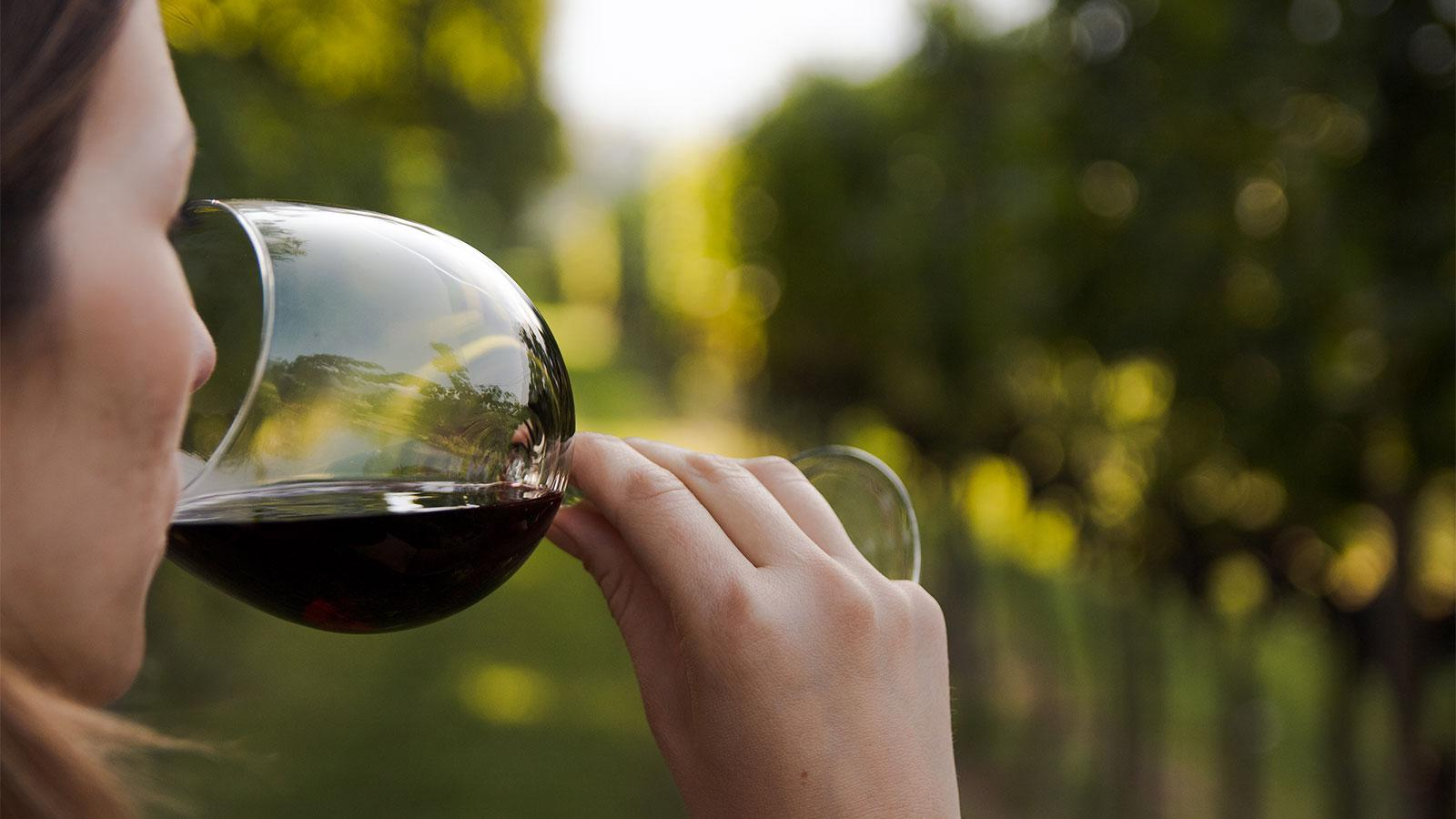 Sommelier Roundtable: How Did You Get into Wine?