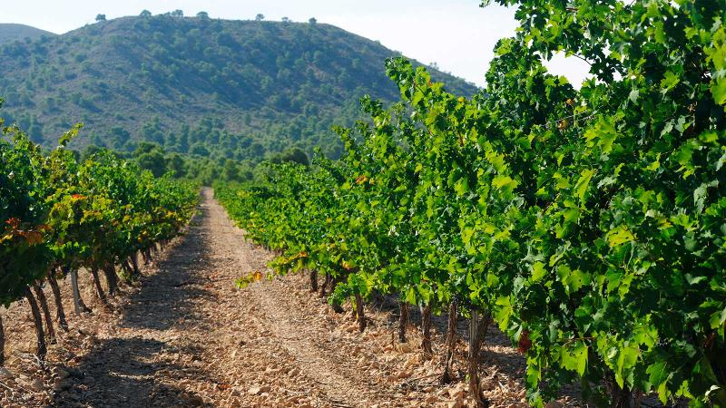 10 Spanish Reds that Look Beyond Rioja