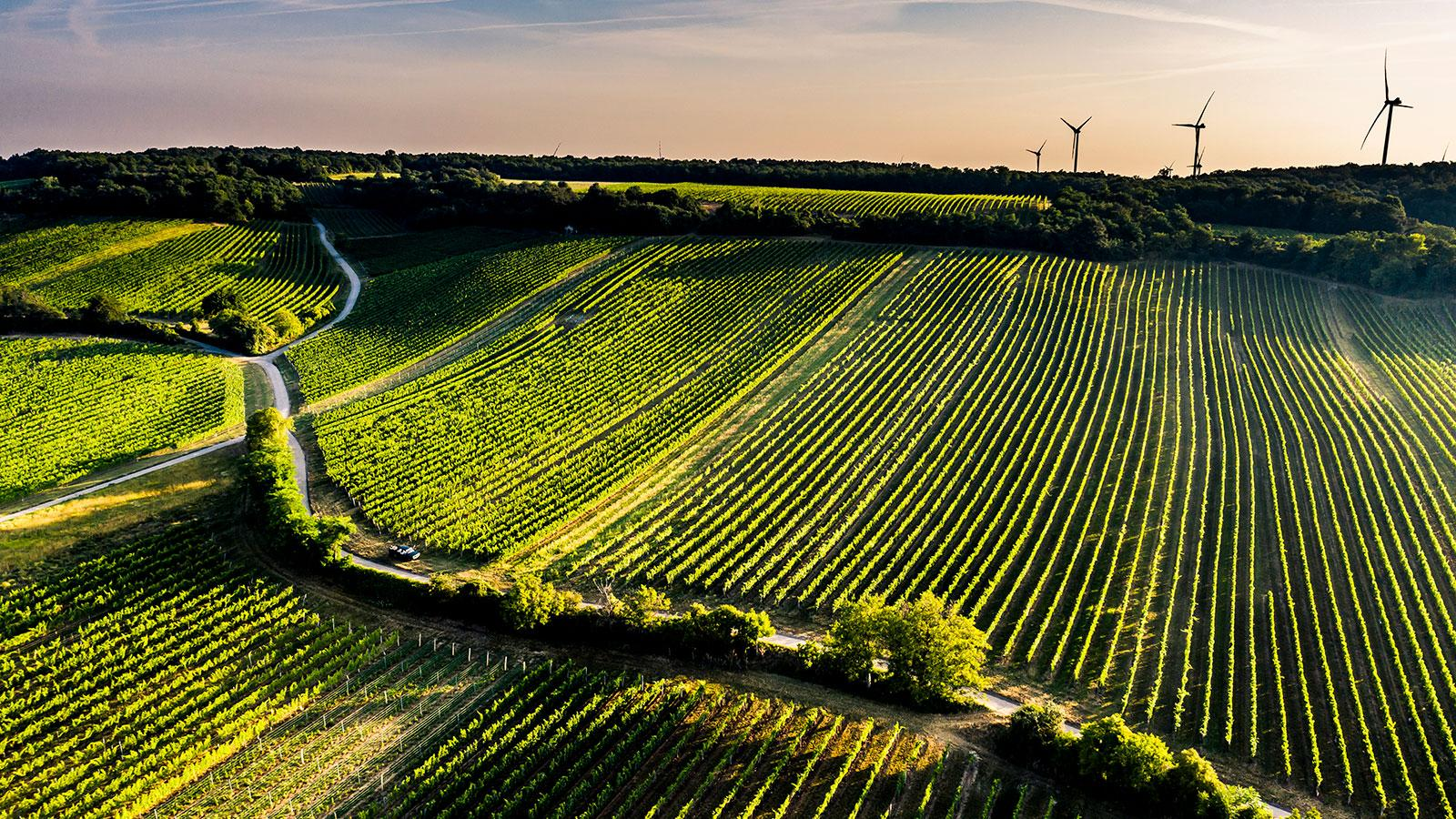 Carnuntum Is Austria's Latest Region to Earn Appellation Recognition