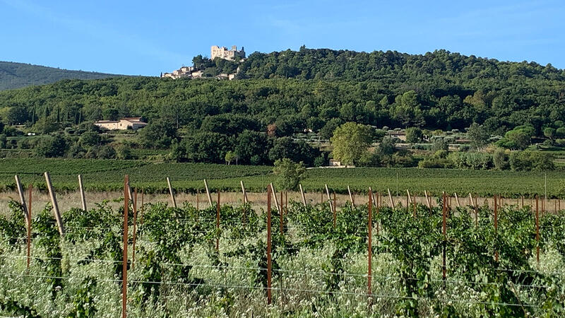 The vineyards of Les Quelles de La Coste sits on the valley floor below the village of Lacoste and its castle ruins.