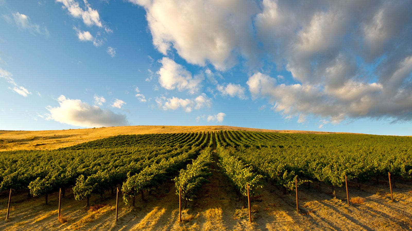8 Washington Wines for $25 or Less