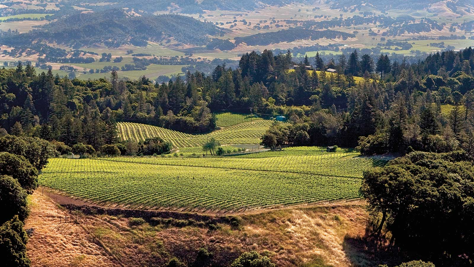 9 California Wines for the Thanksgiving Table at 90+ Points