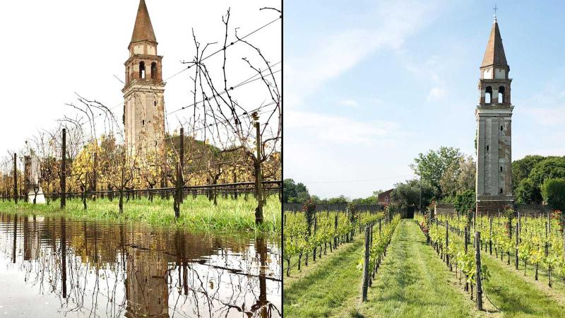 Record Flood Swamps Venice's Unique Vineyard