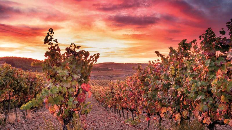 9 Outstanding Mature Reds from Rioja