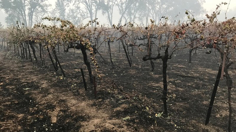 California Wineries Sue Insurance Firms Over Smoke-Tainted Wines
