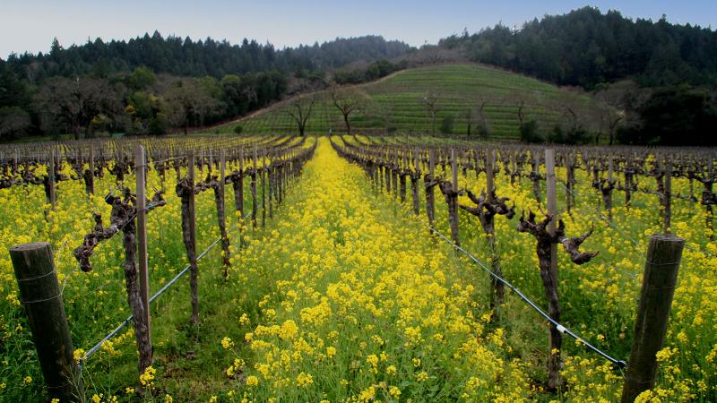 Off Napa's Beaten Path at Detert Family Vineyard