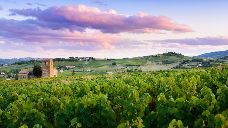 Is Chablis Part of Burgundy? What About Beaujolais?