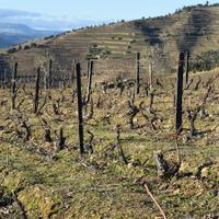 Wine & Soul's Sandra Tavares da Silva and Jorge Serôdio Borges produce several reds from 35-year-old vines at Quinta do Manoella.