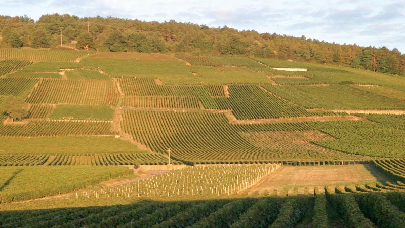 Burgundy's Quality Leader: Domaine de la Romanée-Conti's 2017s and More