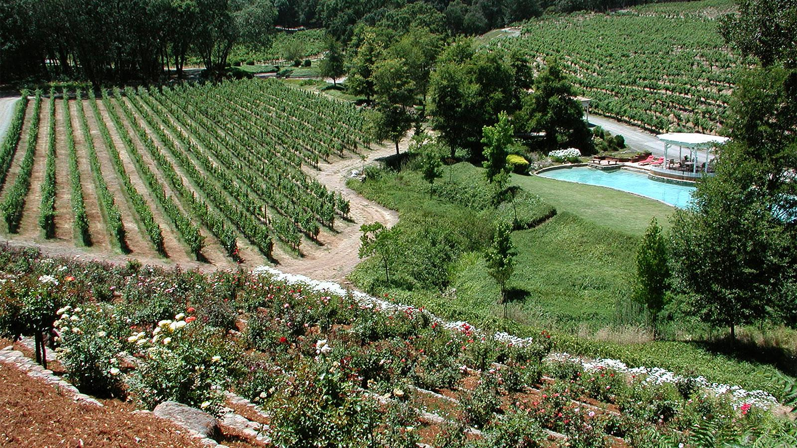 Roederer Champagne Owners Buy Napa's Diamond Creek
