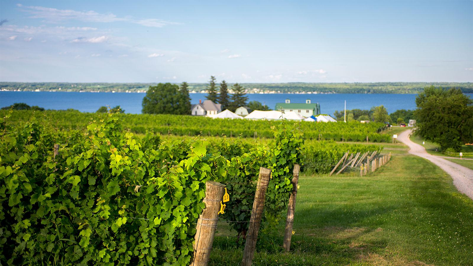 9 Impressive Finger Lakes Rieslings