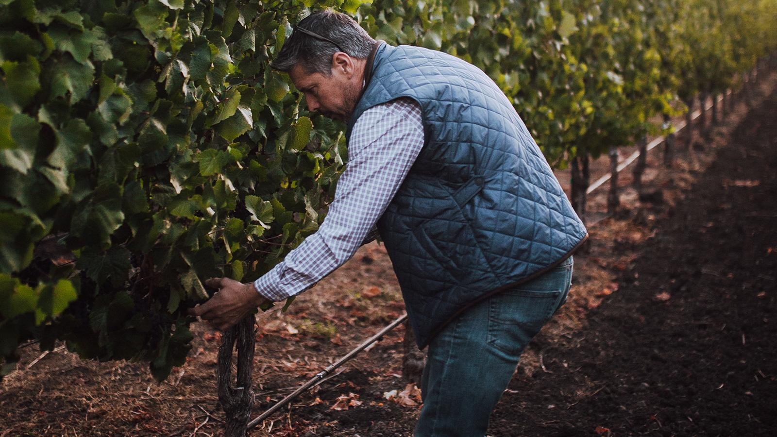 10 California Pinot Noirs for $30 or Less