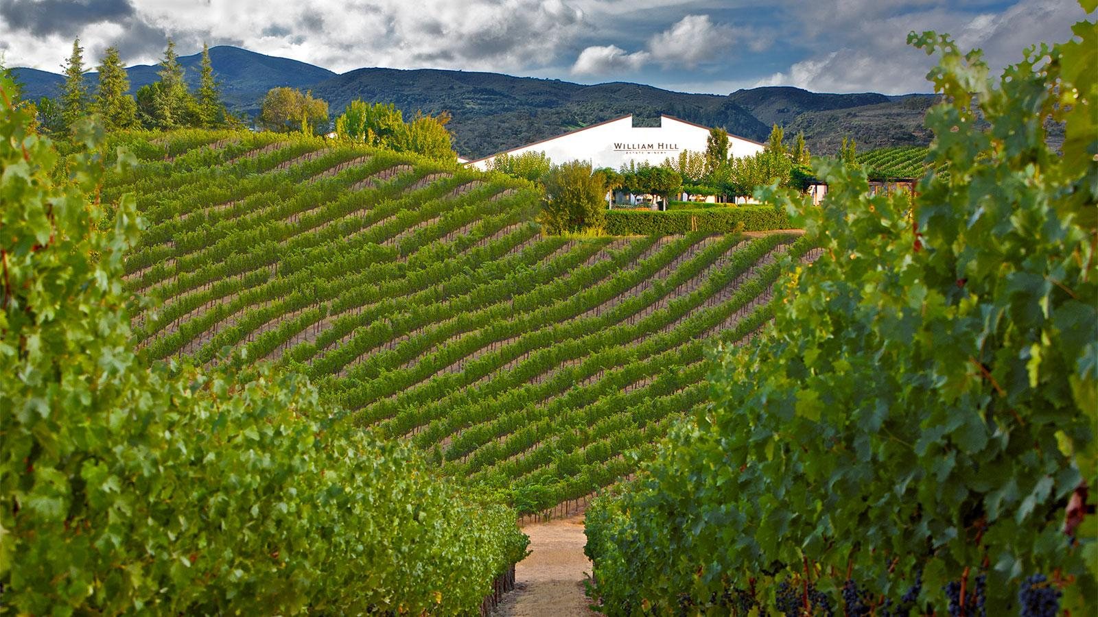 9 Napa Wines for $40 or Less