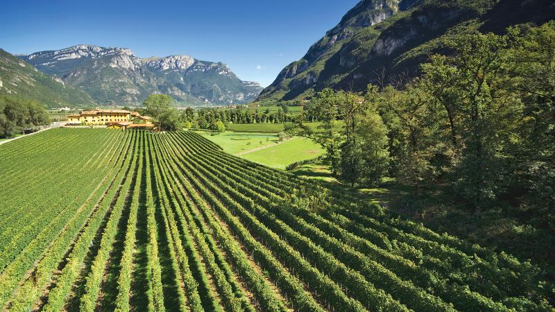 8 Refreshing Whites from Northern Italy