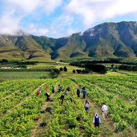 Workers were able to harvest in South Africa, but wine sales are banned for now.
