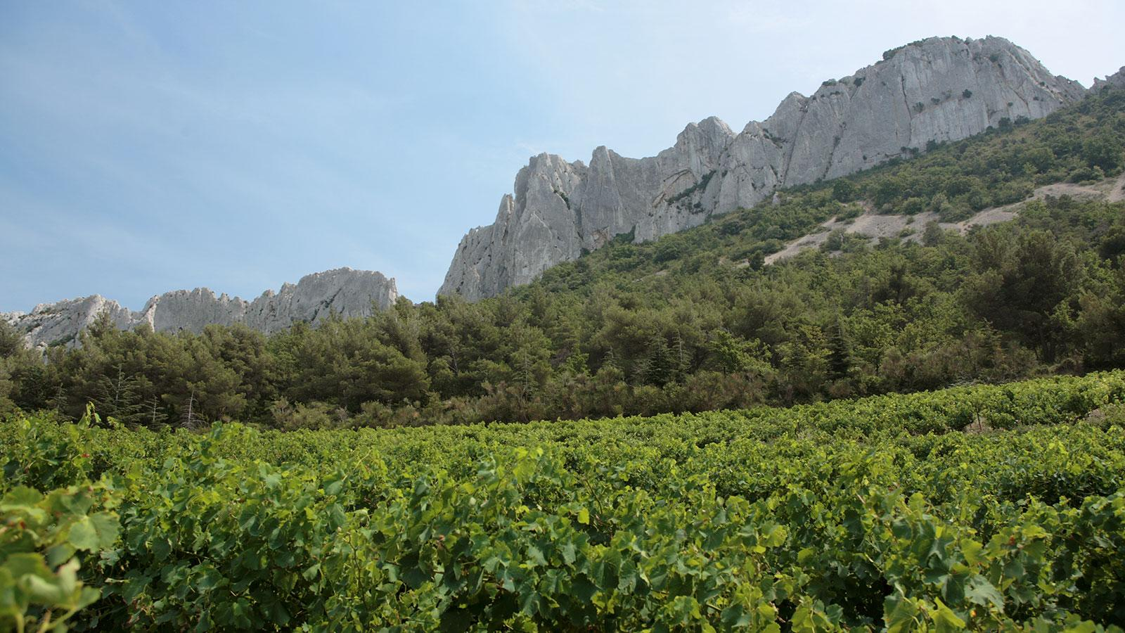 8 Reds from the Southern Rhône