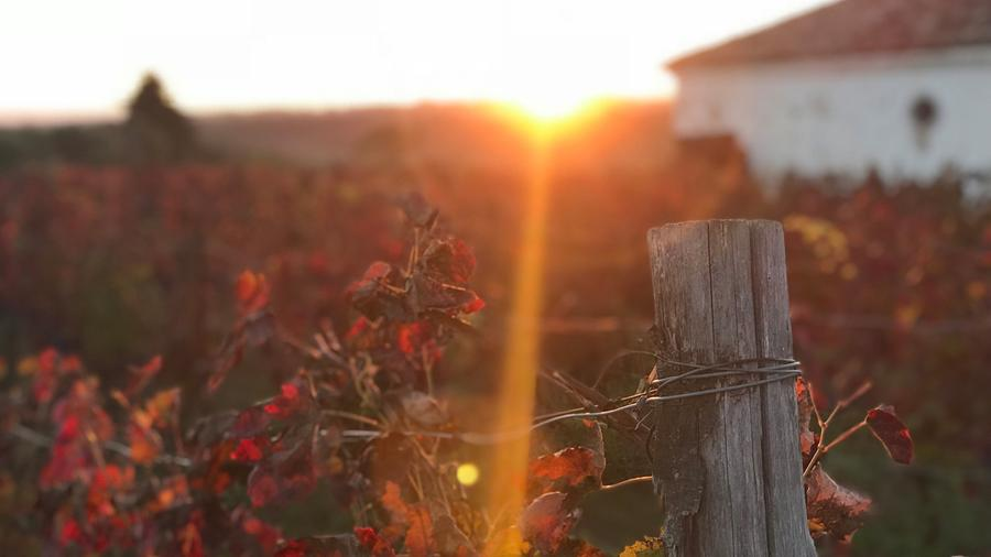 Vines and a sunset