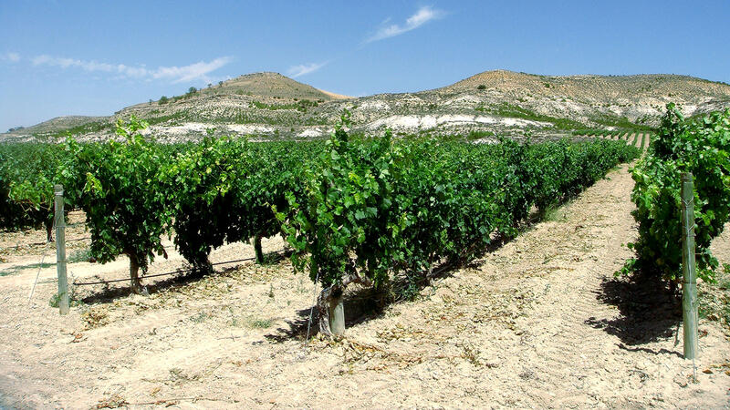 8 Red Values from Ribera del Duero