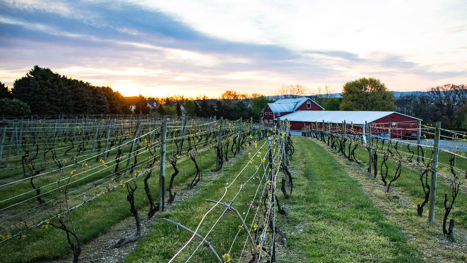 U.S. Wineries Cautiously Begin Reopening Phase