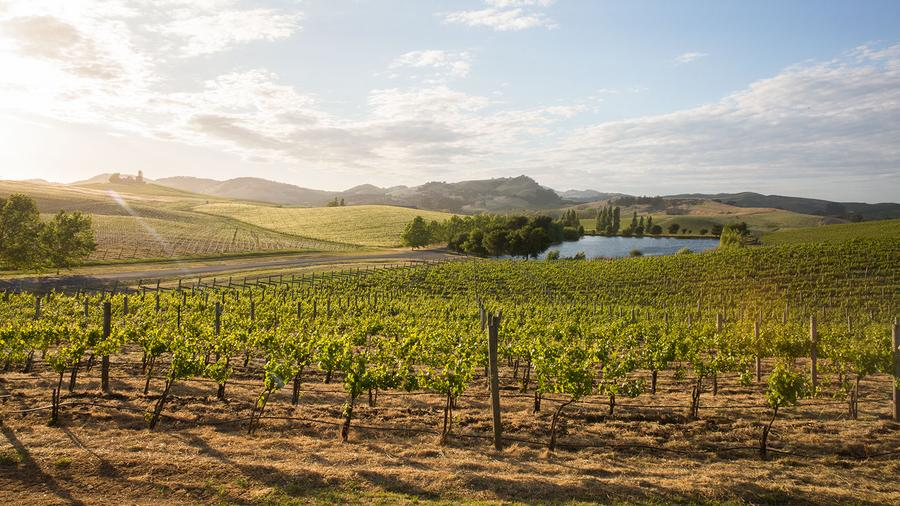 Founded in 1969, Cuvaison is a Carneros pioneer, focusing on estate-grown wines from its 200-acre property.