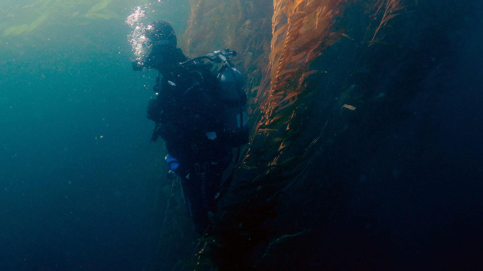 'The Delicacy' Documentary Sinks into 'Dangerous, Reckless' Realm of Sea Urchin Divers