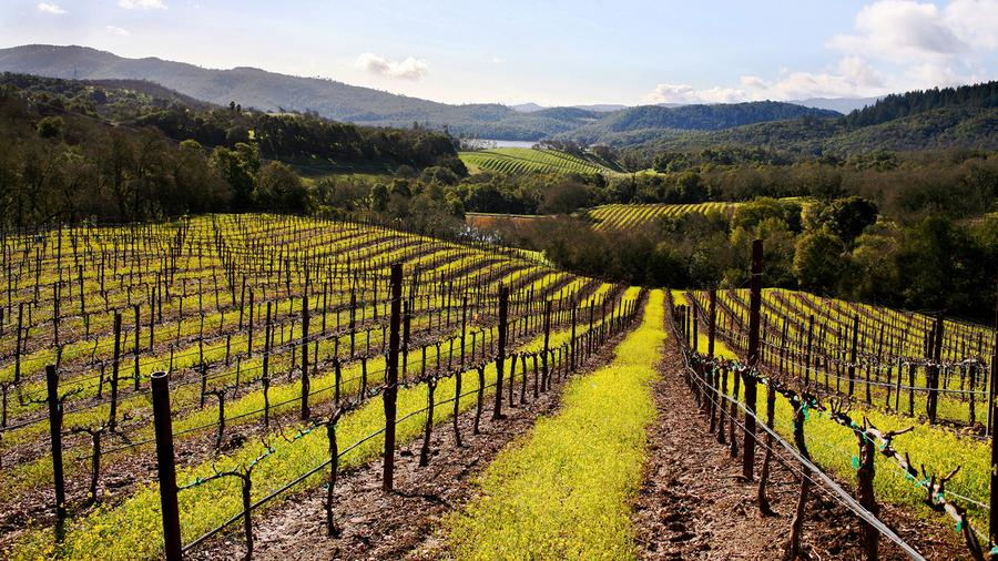 A vineyard and hills