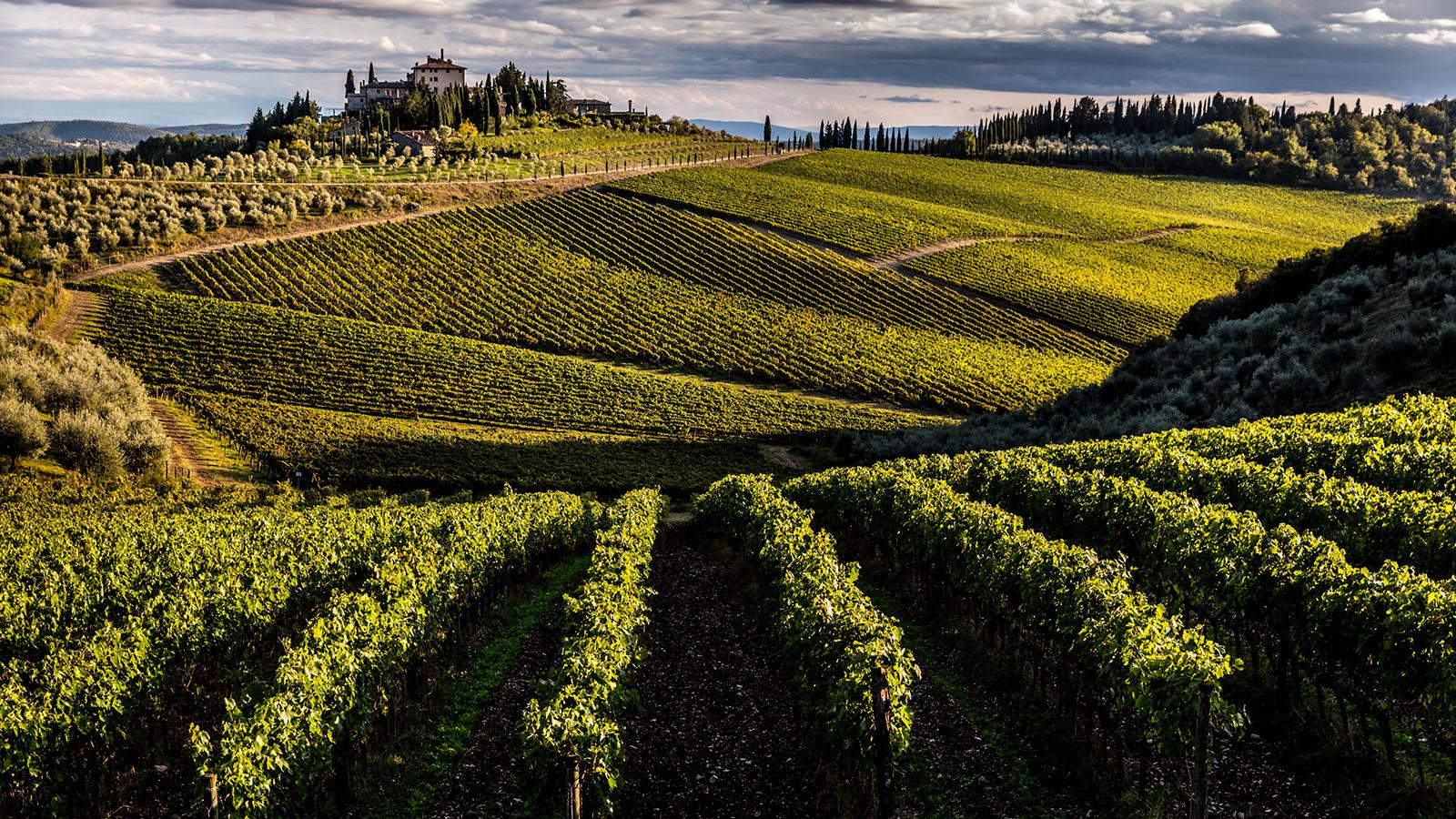 8 Food-Friendly Tuscan Reds at 90+ Points
