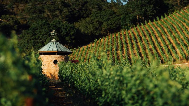 Backus on Track at Joseph Phelps Vineyards