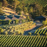 Cliff Lede's Sauvignon Blanc is sourced from old-vine vineyards in Rutherford and Calistoga, among other Napa properties.8 Refreshing Napa and Sonoma Sauvignon Blancs