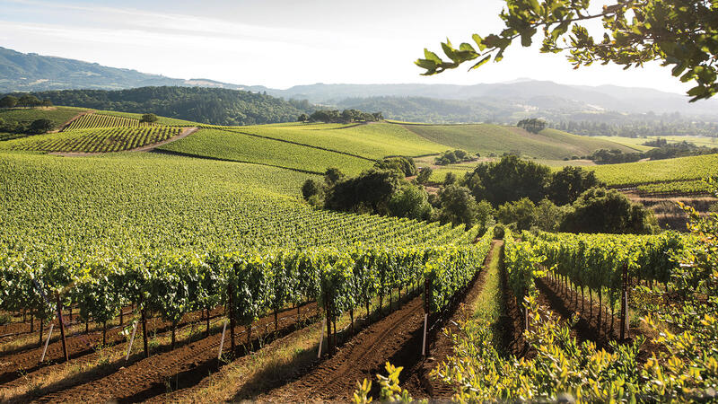 12 Exciting California White Wine Values for $30 or Less