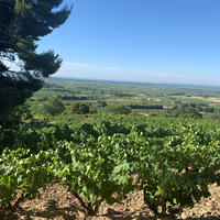 Domaine de L'Oratoire St.-Martin, to the north of Châteauneuf-du-Pape, has 62 acres of old vines.Leading Vintners in Châteauneuf-du-Pape Make Two Big Acquisitions