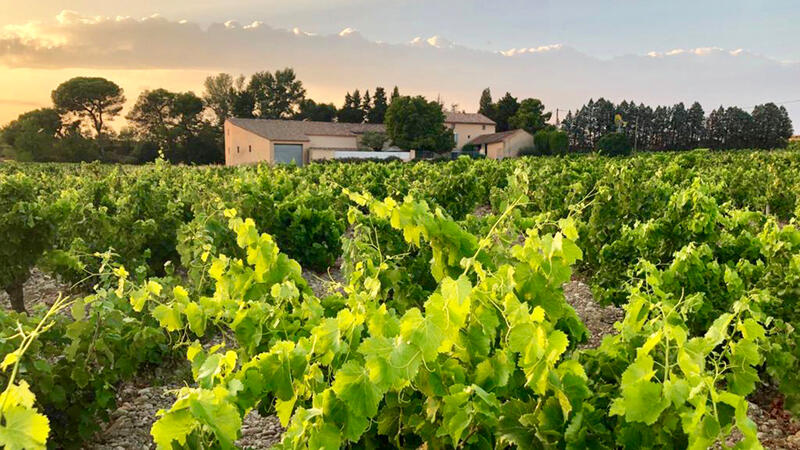 Young Owners of Le Clos du Caillou Expand in Châteauneuf-du-Pape